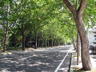 ロマンチック街道(ロマンティック街道)