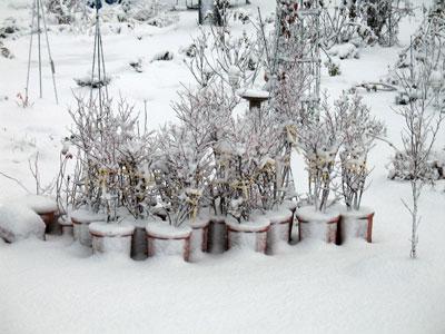 着雪注意報